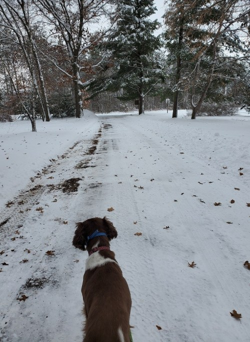 Seven Tips to Help You Stick with Your #Winter Walks #exercise #womenshealth #dogs #springerspaniels #getoutside #walkingtips #dogtips