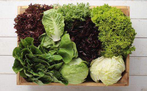 Lettuce - hydrating food